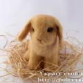 Крольчонок 25