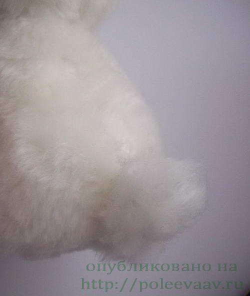 щенок 31